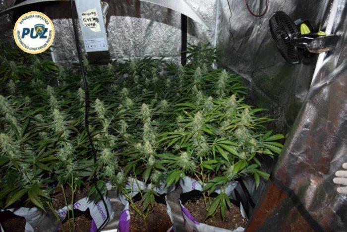 Zagrebačka policija kazneno prijavila 37-godišnjaka za uzgoj marihuane u improviziranom laboratoriju