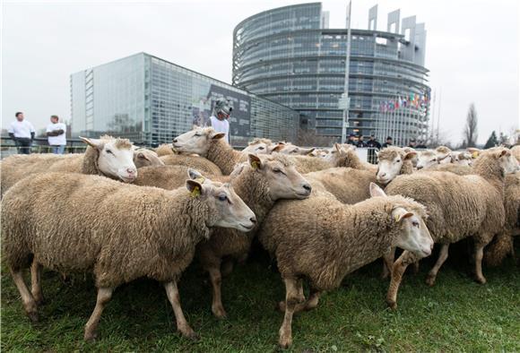 Rumunjska prevozi ovce po ljetnim vrućinama i prkosi EU-u