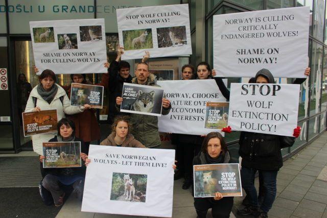 Prijatelji životinja : Norveški vukovi ne umiru sami!
