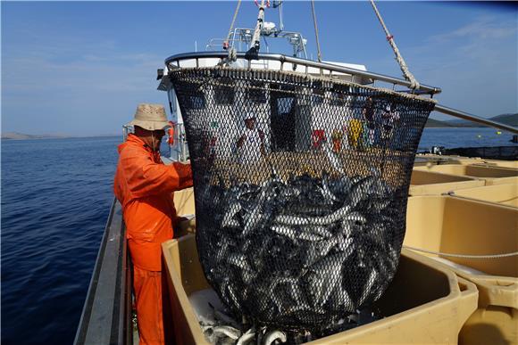 EP usvojio izmjene pravila o ribarstvu, Hrvatska izborila amandman važan za Jadran