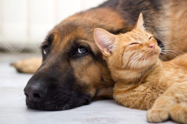 Sirovo meso može ugroziti pse i mačke
