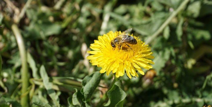 Europski sud potvrdio zabranu insekticida zbog zaštite pčela