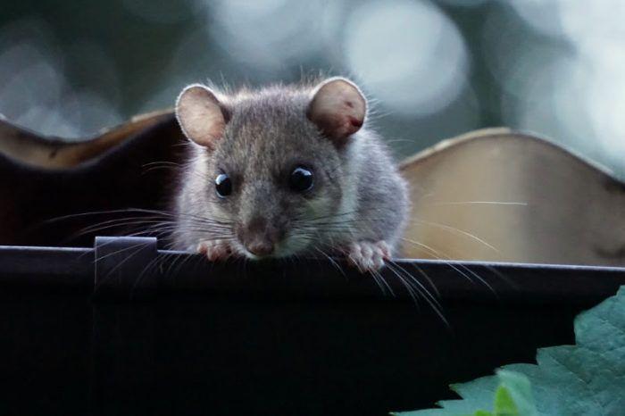 Zaštitnici životinja pozvali Čabar da umjesto ubijanja, puha pretvori u svoj prepoznatljivi znak