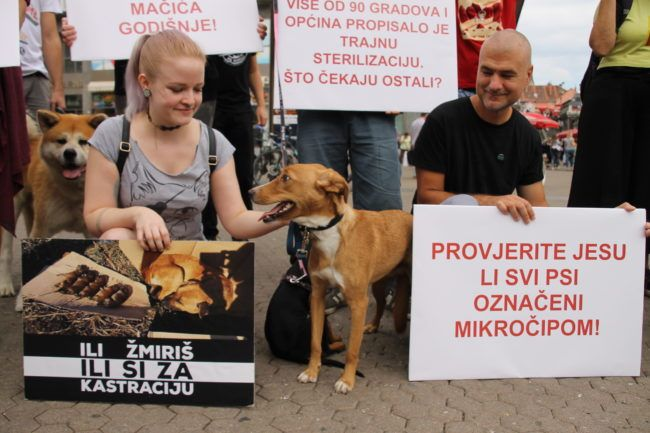 Prijatelji životinja: Više od 100 gradova i općina propisalo trajnu sterilizaciju za pse i mačke