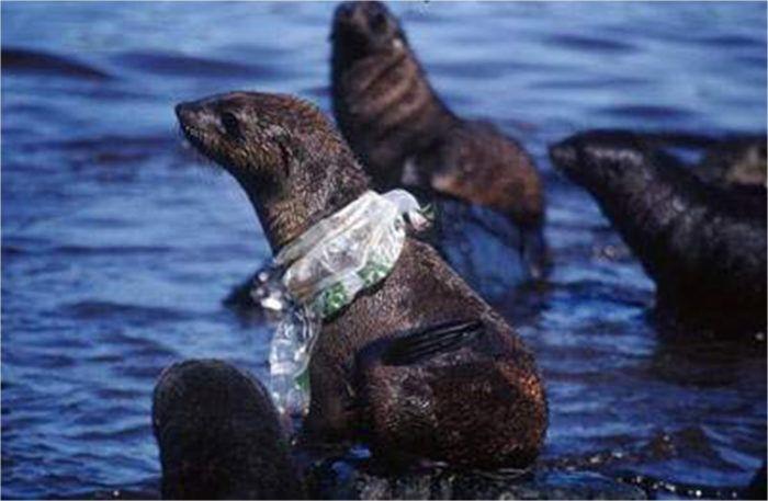 Prijatelji životinja: Plastična vrećica ne smije biti besplatna
