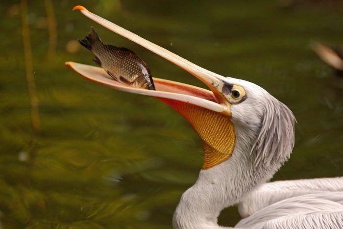 Svjetski dan ptica selica ovaj vikend obilježava se i u zagrebačkom ZOO-u