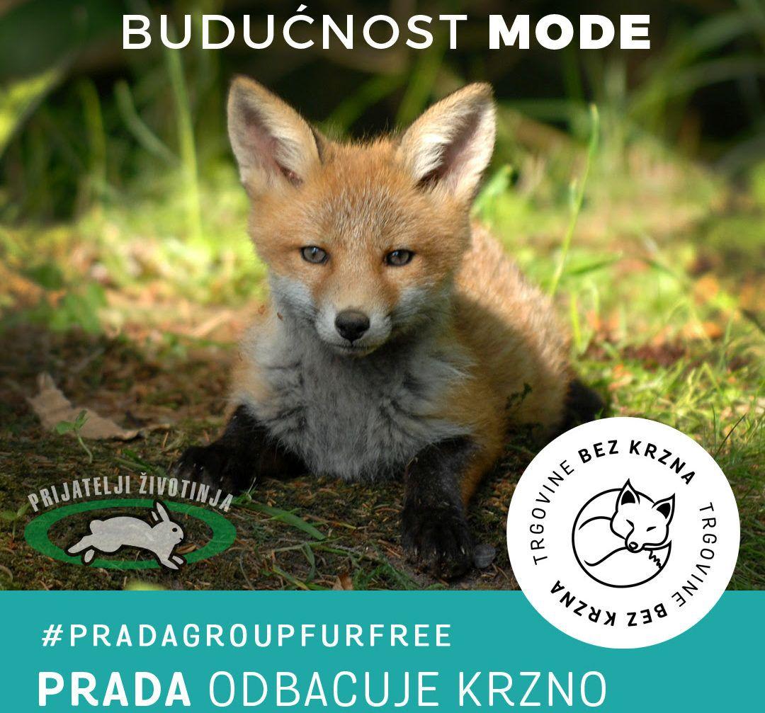 Prijatelji životinja i FFA pohvaljuju luksuznu modnu kuću koja se odlučila za etičnije poslovanje: PRADA ODBACUJE KRZNO!