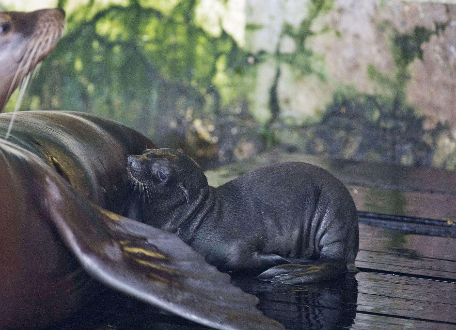 ZG Zoo: Ljupka pojačanja u obiteljima alpaka i morskih lavova