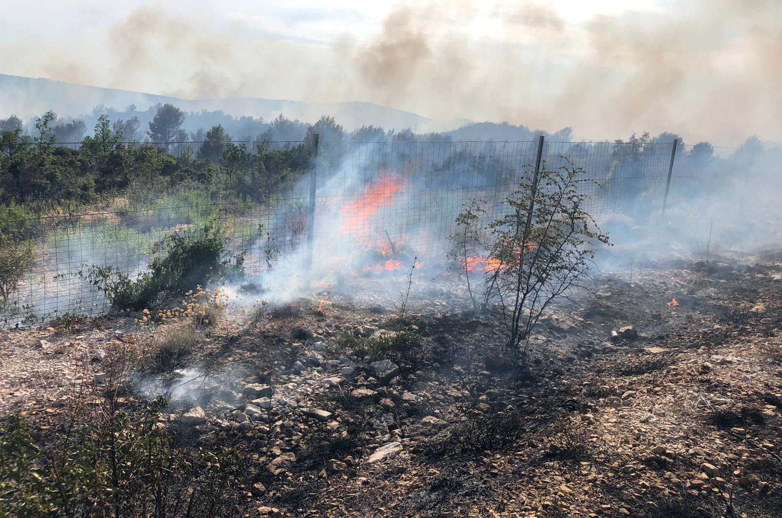 UHIĆENA PIROMANKA – MUP: Požar u šibenskoj Dubravi namjerno podmetnut