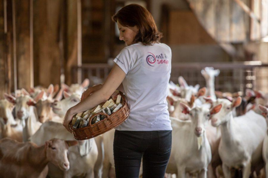 Kako je hrvatska koza postala kraljica higijene? Mlijeko ovog stada postalo je sinonim za ljepotu i higijenu