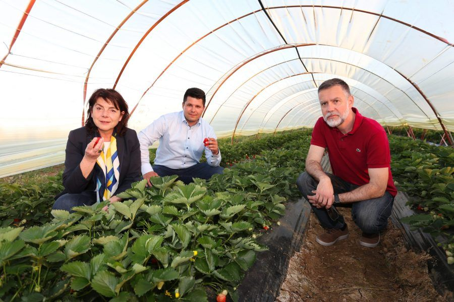 Koalicija ZA u Vrgorcu predstavila program za poljoprivredu